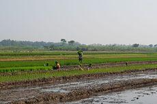 Kementan Apresiasi Lampung Selatan yang Segera Miliki Perda LP2B