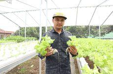 Pengenalan Awal Cara Bertanam Hidroponik bagi Pemula
