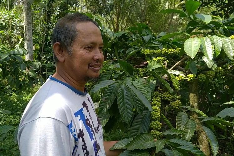 Suryono (54) warga Dusun Gondang Pusung, Desa Wukirsari, Kecamatan Cangkringan, Kabupaten Sleman saat menunjukan perkebunan kopi miliknya.