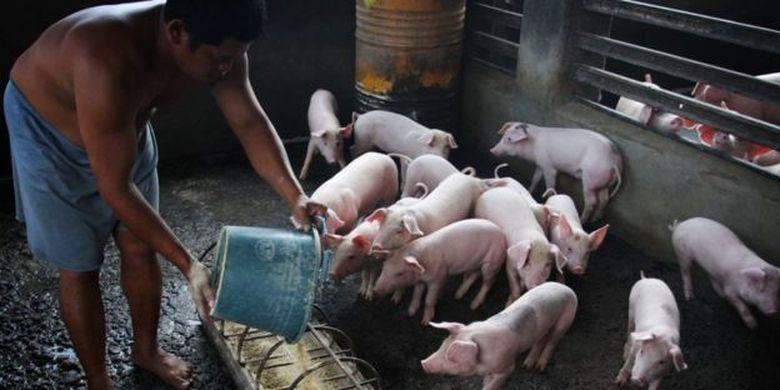 Tiap tahunnya, Sumatera Utara memproduksi lebih dari 40,000 ton daging babi.