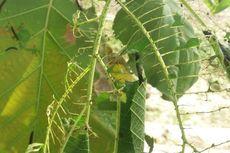 Hama dan Penyakit pada Tumbuhan: Jenis dan Contohnya
