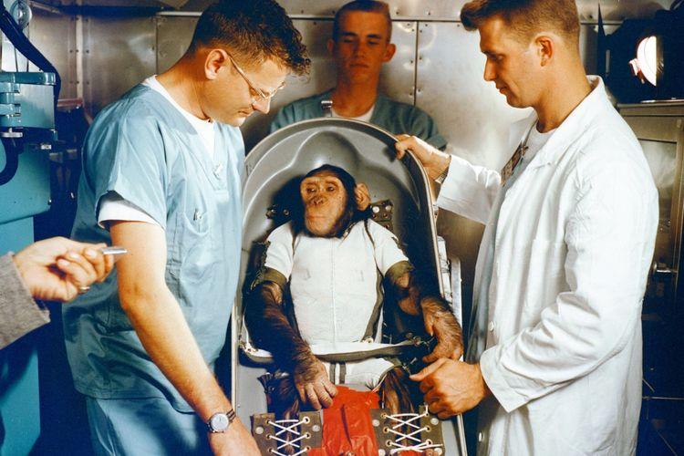 Ham ketika berada dalam kapsul NASA