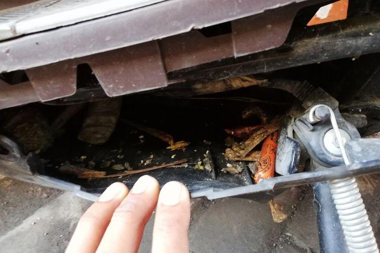Kompartemen motor matik jadi sarang tikus