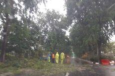 Hujan Deras Disertai Angin Kencang di Surabaya, Puluhan Pohon dan Tiang Listrik Roboh
