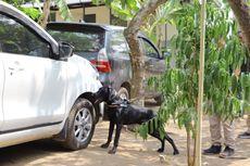 K9 Deteksi Satwa: Ketika Anjing Menyelamatkan Sesamanya...