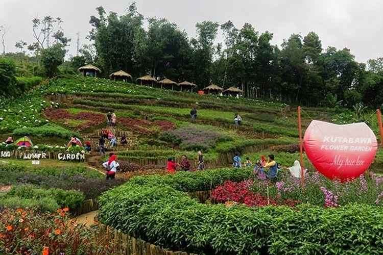 Kutabawa Flower Garden, taman bunga cantik di kaki Gunung Slamet, Jawa Tengah.