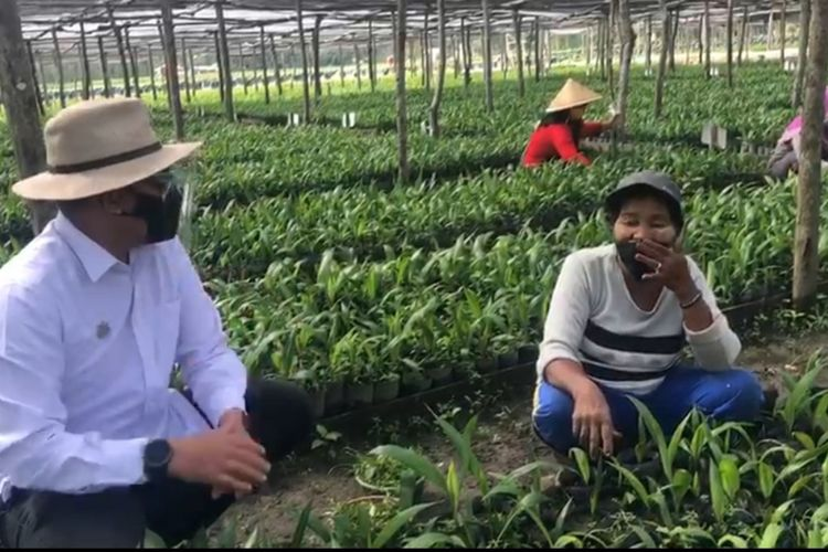 CEO PTPN V Jatmiko K Santosa berbincang dengan ibu-ibu yang bekerja di sentral pembibitan sawit unggul di Kecamatan Bukit Kapur, Kota Dumai, Riau, Sabtu (17/10/2020).