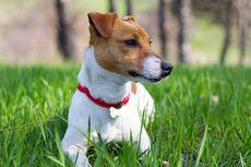 Seekor Anjing di Texas Dites Positif Covid-19 Setelah Pemiliknya Terinfeksi