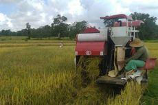 Giliran Petani Lampung yang Panen Raya di Tengah Pandemi Covid-19