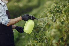 Dampak Pemakaian Pestisida yang Berlebihan