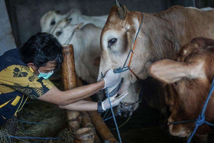 Petugas Dinas Pertanian, Ketahanan Pangan dan Perikanan Solo memeriksa kesehatan sapi kurban saat Sidak Pemeriksaan Hewan di Pajang, Laweyan, Solo, Jawa Tengah, Selasa (28/7/2020). Pemeriksaan tersebut untuk memastikan hewan yang dijual untuk kurban dalam kondisi sehat dan memenuhi syarat untuk kurban saat Idul Adha 1441 H. ANTARA FOTO/Mohammad Ayudha/foc.