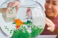 Bentuk-Bentuk Mulut Pada Ikan