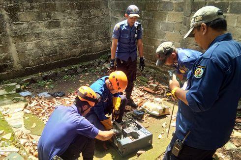 Ular Kobra Muncul di Pemukiman Saat Musim Hujan, Ahli LIPI Jelaskan