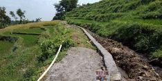 Berkat RJIT, Petani di Sukabumi Bisa Panen hingga 1,5 Ton