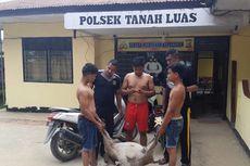 Gara-gara Motornya Jatuh ke Parit, 3 Pencuri Kambing Ditangkap