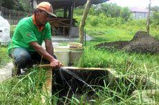 Apa Itu Biogas Kotoran Sapi?