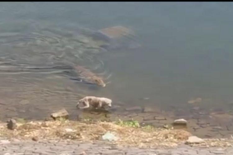 Momen anjing dimangsa buaya di tepi sungai. [SS/YOUTUBE/EXPLORE ADVENTURE]