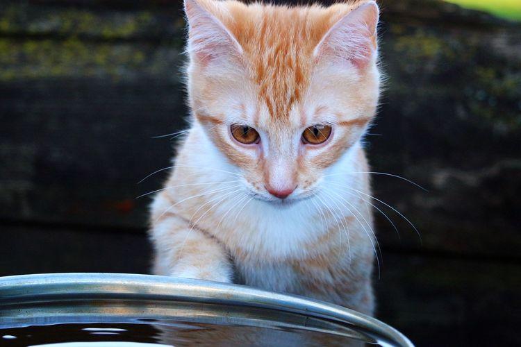 Ilustrasi kucing dan air.