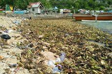 Nelayan Gorontalo Keluhkan Enceng Gondok Menumpuk di Pantai