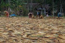 Petani Tembakau Harap Muhaimin Iskandar Bisa Lobi Pemerintah