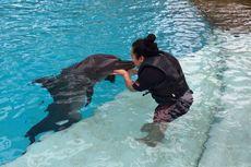 Memeluk, Mencium hingga Berdansa dengan Lumba-lumba di Singapura