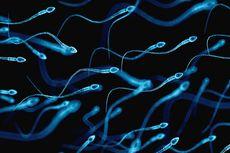 Penelitian Baru Ungkap Sperma Bisa Bertahan di Luar Angkasa