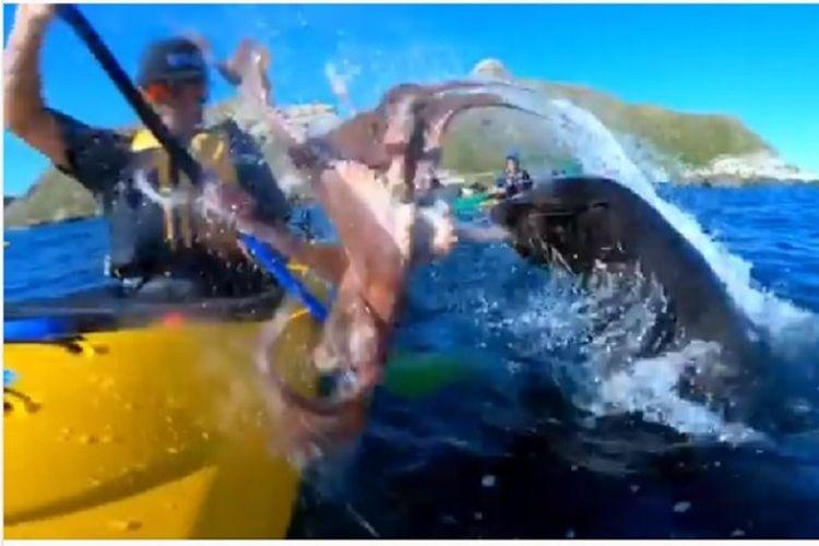 Seorang petualang ditampar anjing laut dengan gurita
