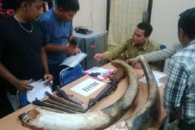 Dua gading gajah Sumatera (Elephas maximum sumatranus) yang disita Polda Riau sebagai bukti aksi mafia pemburu gading gajah yang diringkus pada Selasa (10/2/2015).