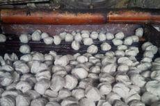 Pabrik Pembuat Bakso Goreng di Bandung Ternyata...
