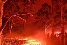 Kebakaran Besar Lalap Hutan Situs UNESCO Australia
