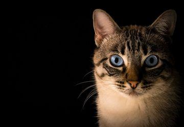 Mengapa Kucing Memiliki Mata yang Berwarna-Warni?