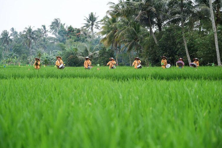 Marching band Opa-Oma di hamparan persawahan di Desa Wisata Cisande, Kabupaten Sukabumi, Jawa Barat.