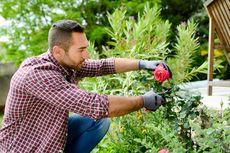 7 Manfaat Berkebun di Rumah untuk Kesehatan
