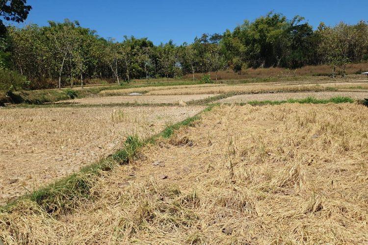 Asuransi Pertanian, Penyambung Asa Petani di Lamongan