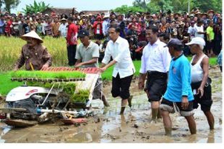 Presiden RI Joko Widodo, Jumat (6/3/2015),  turun ke sawah berlumpur untuk menanam padi dengan menggunakan rice transplanter hasil produksi dalam negeri. Presiden didampingi Menteri Pertanian, Amran Sulaiman dan Gubernur Jawa Timur, Soekarwo.