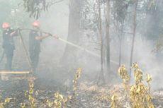 3 Hektare Lahan yang Terbakar di Pekanbaru Berhasil Dipadamkan Petugas