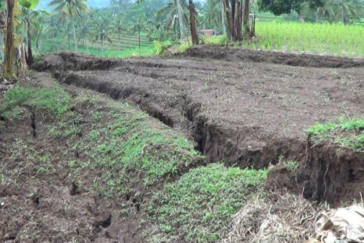 Areal pesawahan di Kampung Cibadak, Desa Sukamahi, Kecamatan Sukaresmi, Kabupaten Cianjur, Jawa Barat yang retak dan dipastikan gagal tanam