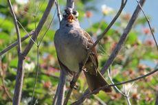 Dengar Kicauan Burung di Alam Bikin Hidup Lebih Bahagia, Percaya?