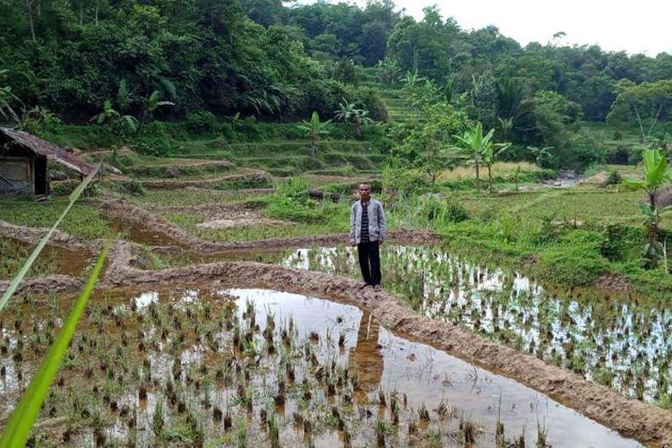 Petani disarankan untuk ikut Program Asuransi Usaha Tani Padi (AUTP)