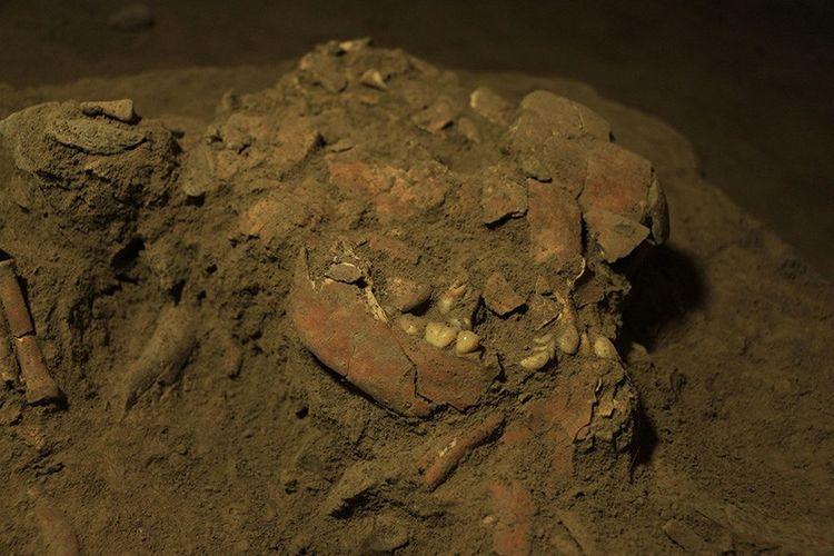 Tengkorak dan gigi terkompresi seorang wanita muda yang dijuluki Bessé ditemukan di dalam gua Leang Panninge, situs arkeologi gua prasejarah batu kapur yang ada di Kabupaten Maros, Sulawesi Selatan, Indonesia. Universitas Hasanuddin