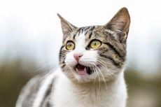 Hidung Kucing Beringus, Apakah Ini Normal?