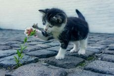 6 Alasan Pemilik Sebaiknya Ajak Kucing Bermain