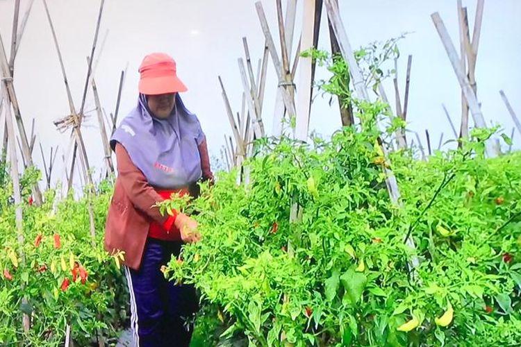 Menghadapi new normal, sebagian petani di Jawa Barat memanfaarkan teknologi digital untuk memasarkan produknya. Hal ini sebagai salah satu upaya menjaga pasokan pangan.