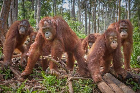 Peringatan, 90 Persen Hewan Darat akan Kehilangan Habitatnya pada 2050