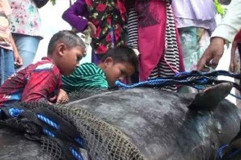 Lumba-Lumba Penuh Luka yang Terdampar di Polewali Akhirnya Mati