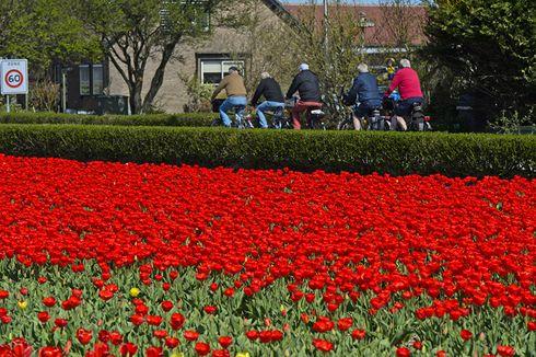 Tawaran Beasiswa Pendidikan di Belanda, Biaya Lebih Terjangkau dari Australia