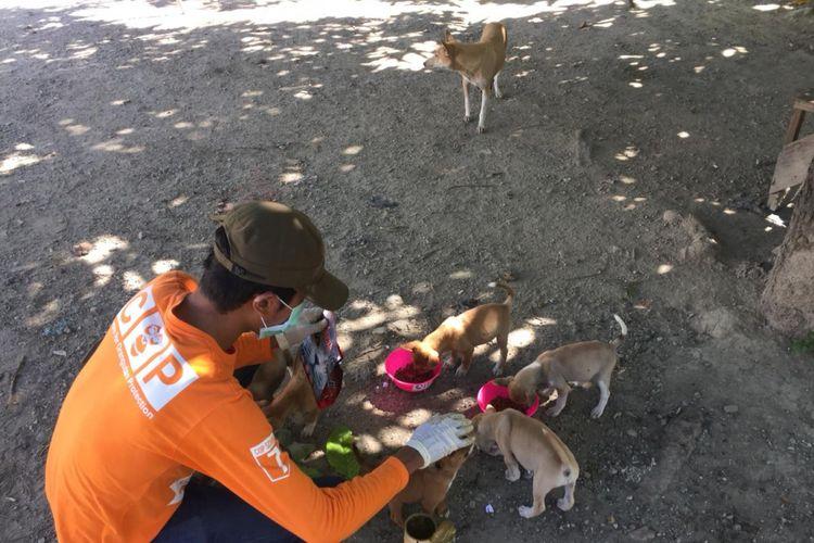 Animals Warrior memberi makan anjing-anjing kecil di salah satu wilayah di Palu.