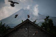Cerita di Balik Video Kawah Gunung Merapi, Direkam Pendaki Pakai Ponsel, Tuai Pro Kontra
