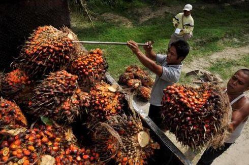 Genjot Produksi Kelapa Sawit, Sinar Mas Agribusiness and Food Terus Maksimalkan Penggunaan Teknologi