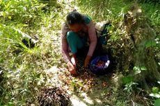 Usia 80 Tahun, Nenek Sulastri Harus Jalan Puluhan Kilo Cari Brondolan Sawit demi Sesuap Nasi